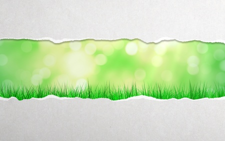 torn paper and grass background photo