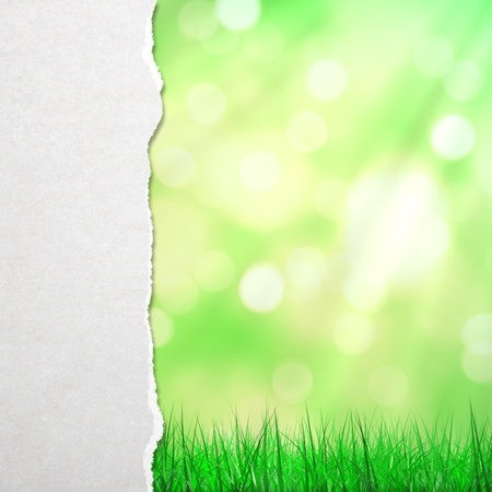 white torn paper and abstract grass background photo