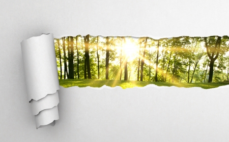 ripped: gray torn paper and green forest background Stock Photo