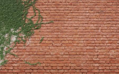green ivy on brick wall Stock Photo - 18761270