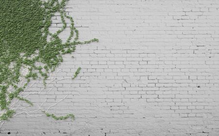 solid color: green ivy on brick wall Stock Photo