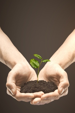 green thumb: hands holding leaf on brown background