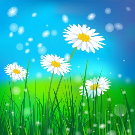 white camomile on green grass background 矢量图像