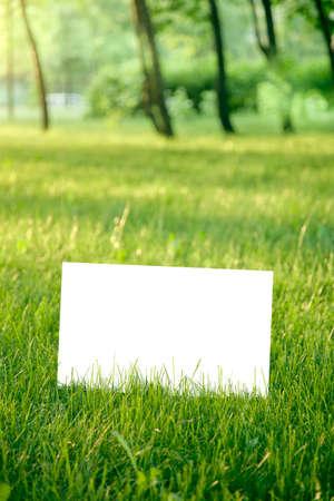 papier vierge: blank paper on green grass