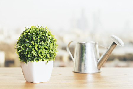 refelction: Wooden desktop with small plant and iron watering-can