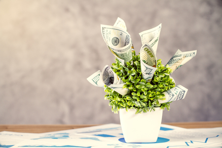 Financial growth concept with dollar banknote plant on wooden table with business charts and concrete wall in the background Stock Photo - 55598119