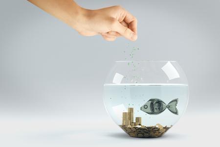 billete de un dólar alimentar a mano en forma de un pez en el acuario Foto de archivo