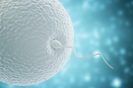 Ovule and spermatozoon on blue background. Concept of conception. 3D Rendering