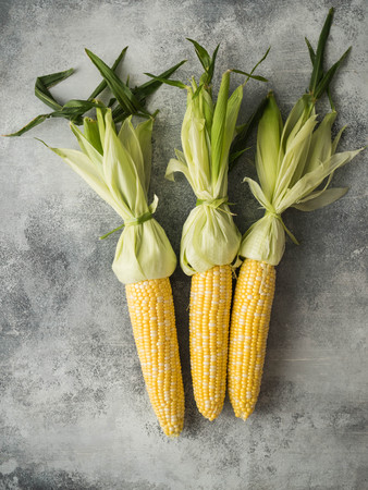 Three cobs of fresh, yellow, peeled corn with knotted leaves on a gray background
