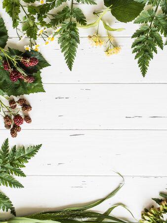 Botanical frame of blackberry, chamomile, linden flower, clover on wood Stock Photo