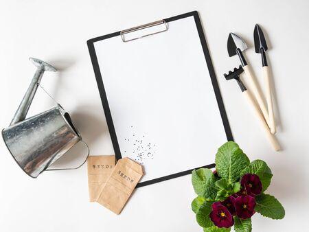 Zwischenablage und Papier für Text, Burgunder Primelblume, Gartengeräte und Samen in Papiertüten auf weißem Hintergrund. Gartenkonzept. Ansicht von oben.