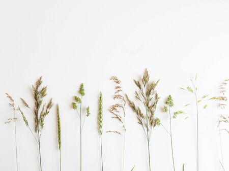 Row from beautiful wild grasses like orchard grass, barren brome and ryegrass isolated on a white background with copy space