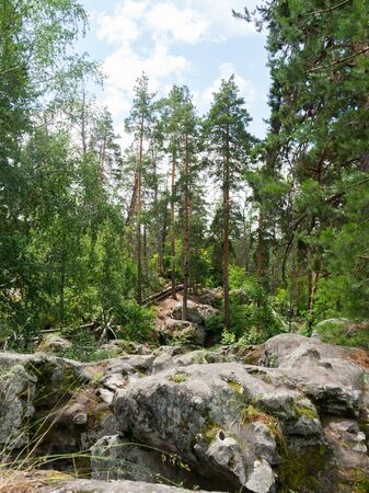 Beautiful round stones in a relic pine forest. Lime cobblestones in stone forest. Traveling in Russia.