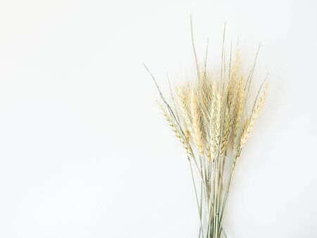 Bouquet Ears of wheat of a light green pastel shade on a white background. Top view. copy space