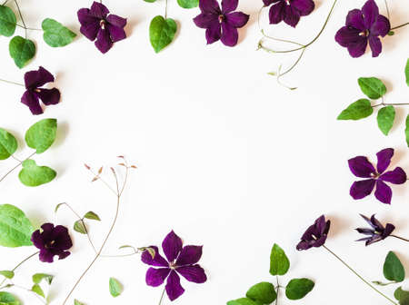 Frame of purple clematis flowers and leaves isolated on white. Top view. Copy space