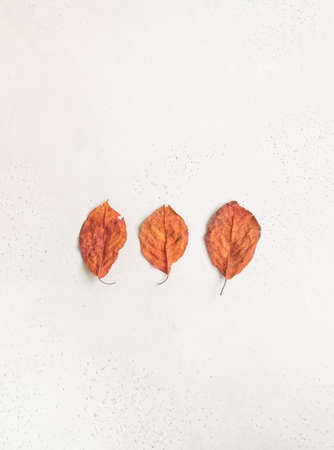 Minimalistic composition of three red autumn leaves of imperfect shape on white textured background. Top view. copy space Stock fotó - 155450517