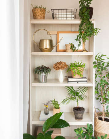 Houseplants and home decor on wooden shelves. Modern room decor. Front view. Stock fotó