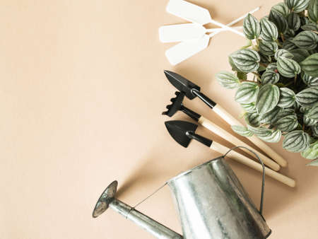 Flat lay composition with houseplant in pots, metal watering can and garden tools on beige background. Garden concept. Top view. Copy space
