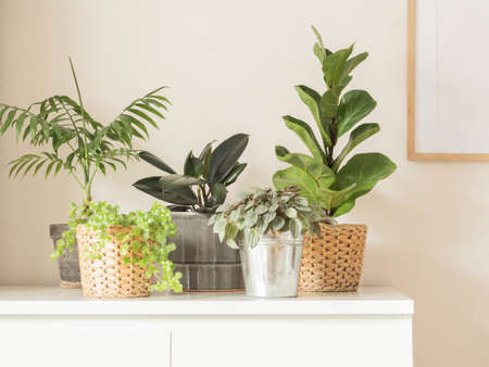 Various indoor plants in pots on a white chest of drawers against white wall