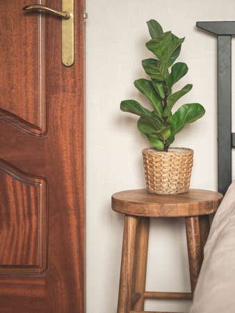 Home plant Ficus lyrata in straw flowerpot on wood stool next to the bed. Minimal modern interior Stock fotó