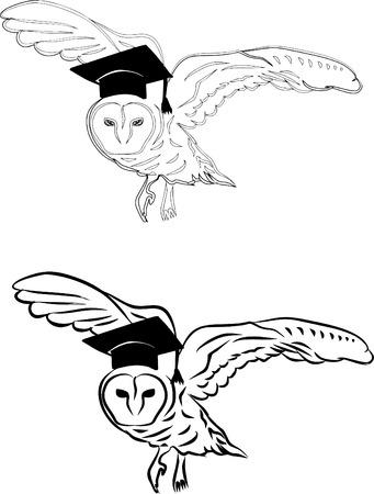 Owl - education