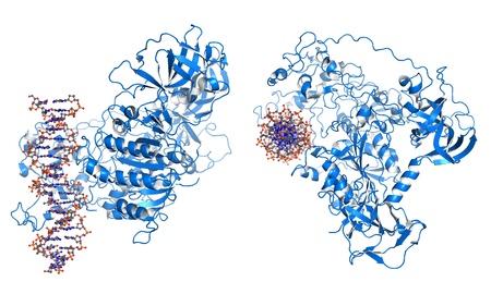modificar: Dnmt3 es una enzima de un grupo de methlytransferases de ADN, que modifican el ADN con el fin de regular la expresi�n g�nica y la actividad Foto de archivo
