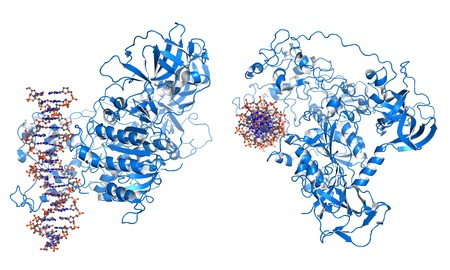 protein structure: DNMT3 is an enzyme from a group of DNA methlytransferases, which modify DNA in order to regulate gene expression and activity