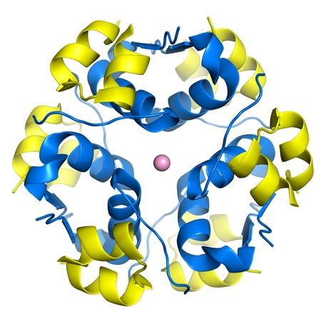 monomer: Mol�culas de insulina reunidos en un hex�mero, coordinado por el �tomo de zinc insulina es una hormona pancre�tica que es central en la regulaci�n del metabolismo de grasas y carbohidratos en el cuerpo, se almacena en el cuerpo como un hex�mero, mientras que la forma activa es mon�mero Foto de archivo