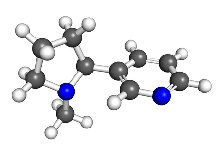 nicotine: Nicotine, ball and stick model  Nicotine is an active compound of tobacco, with stimulating effect in low doses  Atoms are colored according to convention  carbon-gray, nitrogen-ble, hydrogen-white