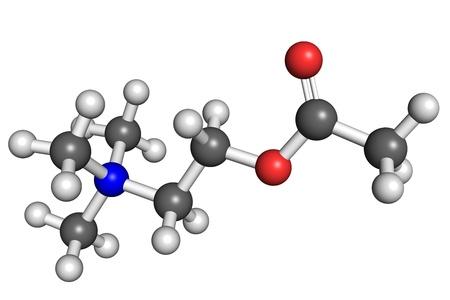 quimica organica: La acetilcolina es un neurotransmiter importante en el sistema nervioso tanto central como periférico. Foto de archivo