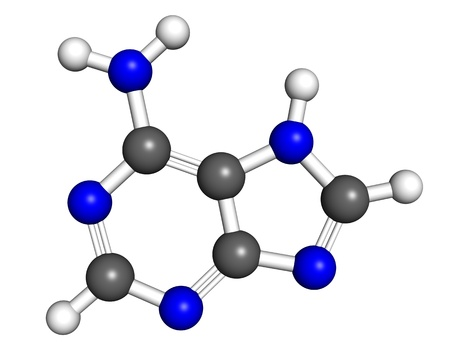genomics: Adenine is a nucleobase found in DNA and RNA molecules. Ball and stick model, atoms coloured according to convention.