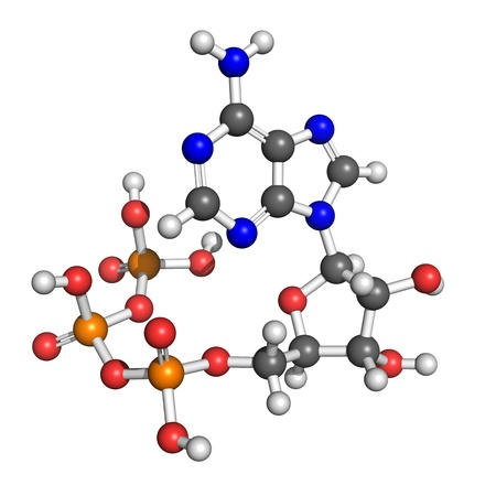 chemical compound: Adenosine-5-triphospate model. ATP, so called &quot,molecular currency&quot, is used as a source of energy in many metabolic processes. Stock Photo