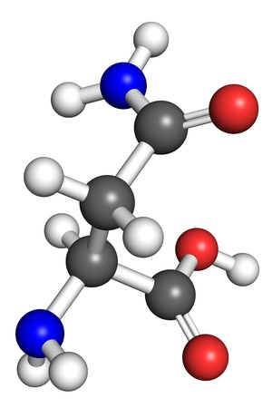 Asparagine (amino acid) molecule, ball and stick model. Atoms colored according to convention. Stock Photo - 18665317