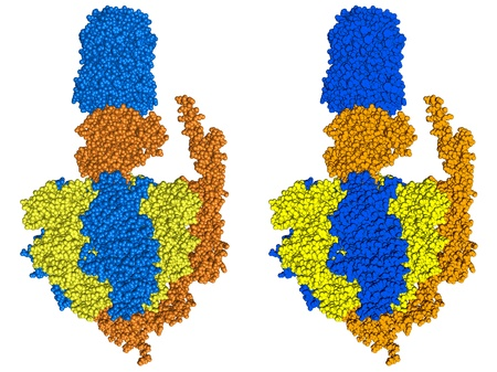 emphasise: ATP synthase, space filling model. Atoms are colored to emphasise particular subunits.