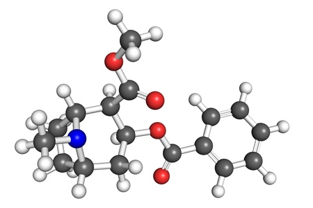 biochemical: Cocaine molecule, ball and stick model. Cocaine is an illegal psychoactive drug.