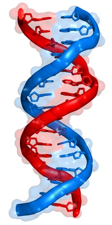 DNA. 18-base-pair stretch of a deoxyribonucleic acid in its B-DNA conformation. Stock Photo - 18665353