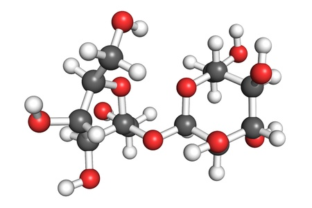 sugar metabolism: Saccharose molecule, ball and stick model