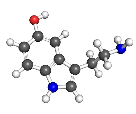 contributes: Serotonin is a hormone that contributes to feeling of happines  Ball and stick model, atoms are coloured according to convention  nitrogen-blue; carbon-gray; oxygen-red; hydrogen-white   Stock Photo