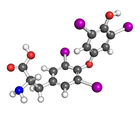 Thyroxine, ball and stick model. Thyroxine is a thyroid hormone that regulates metabolism. Atoms are colored according to convetion. photo