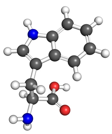 biosynthesis: Tryptophan (amino acid) molecule, ball and stick model. Atoms colored according to convention.