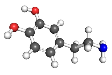 convention: Dopamine is a hormoneneurotransmitter with a variety of functions, most notably reward-driven learning and developing addictive behaviour. Atoms are colored according to convention (hydrogen-white, carbon-gray, nitrogen-blue, oxygen-red).
