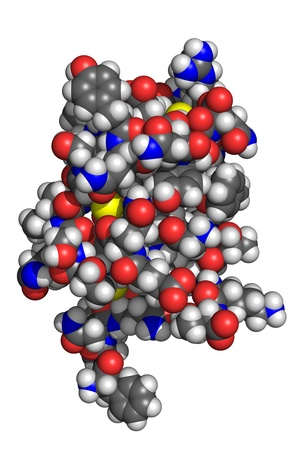 metabolism: Insulin molecule, space-filling model  Insulin is a pancreatic hormone which is central to regulating fat and carbohydrate metabolism in the body  Atoms are coloured according to convention  nitrogen-blue; carbon-gray; oxygen-red; hydrogen-white; sulphur-