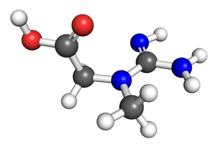 enzyme: Creatine is an organic molecule naturally find in vertebrates which helps to deliver energy to skeletal muscle and some other tissues. Ball and stick model.