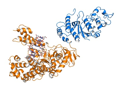 Taq polymerase is a thermostable DNA polymerase, frequently used for PCR, an important method in biomedical research that enables amplification of short DNA segments. Stock Photo - 19977212