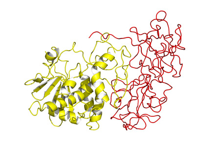 proteomics: Ricin model. Ricin is a highly toxic protein found in the seeds of castor oil plant.