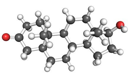 calvitie: Dihydrotestost�rone est une hormone st�ro�de et un facteur contribuant � la calvitie masculine, l'hyperplasie b�nigne de la prostate et le cancer de la prostate. Banque d'images