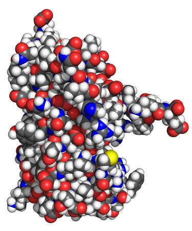 The structure of human interferon-2a (Roferon-A), space-filling model with conventionally colored atoms. Interferons are proteins released by cells in presence of pathogens. Several types are approved for pharmaceutical use in cancer and viral therapy.