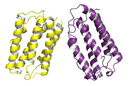 cytokine: The structure of human interferon beta, cartoon model. Interferons are proteins released by cells in presence of pathogens. Several types are approved for pharmaceutical use in cancer and viral therapy. Stock Photo