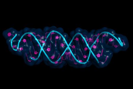 pequeño ARN de interferencia unido a un ARN mensajero, modelo de dibujos animados con superficie semitransparente. Los ARNip son herramientas de interferencia de ARN sintético que se utilizan para inducir la reducción temporal de la expresión de ARNm. Foto de archivo