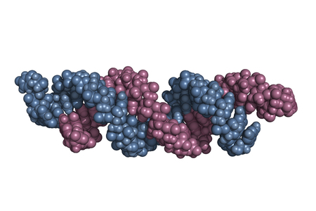 small interfering RNA bound to a messenger RNA, space-filling model. siRNAs are synthetic RNA interference tools used for inducing temporary reduction of mRNA expression.